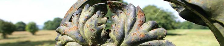 Acanthus Rosette